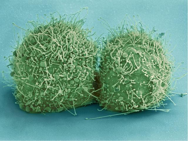 חיידקים